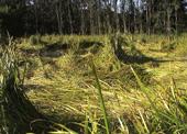 8-10-nj-marsh-reeds-blog