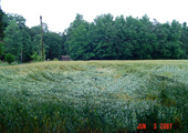 07-hopewellva_randomhay_cropped