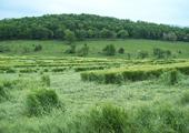 5-15-08-stuart_wheat