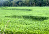 9-12-08-bedfordgrass1