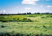 7-11-04-litchfieldmnbarley-blog1